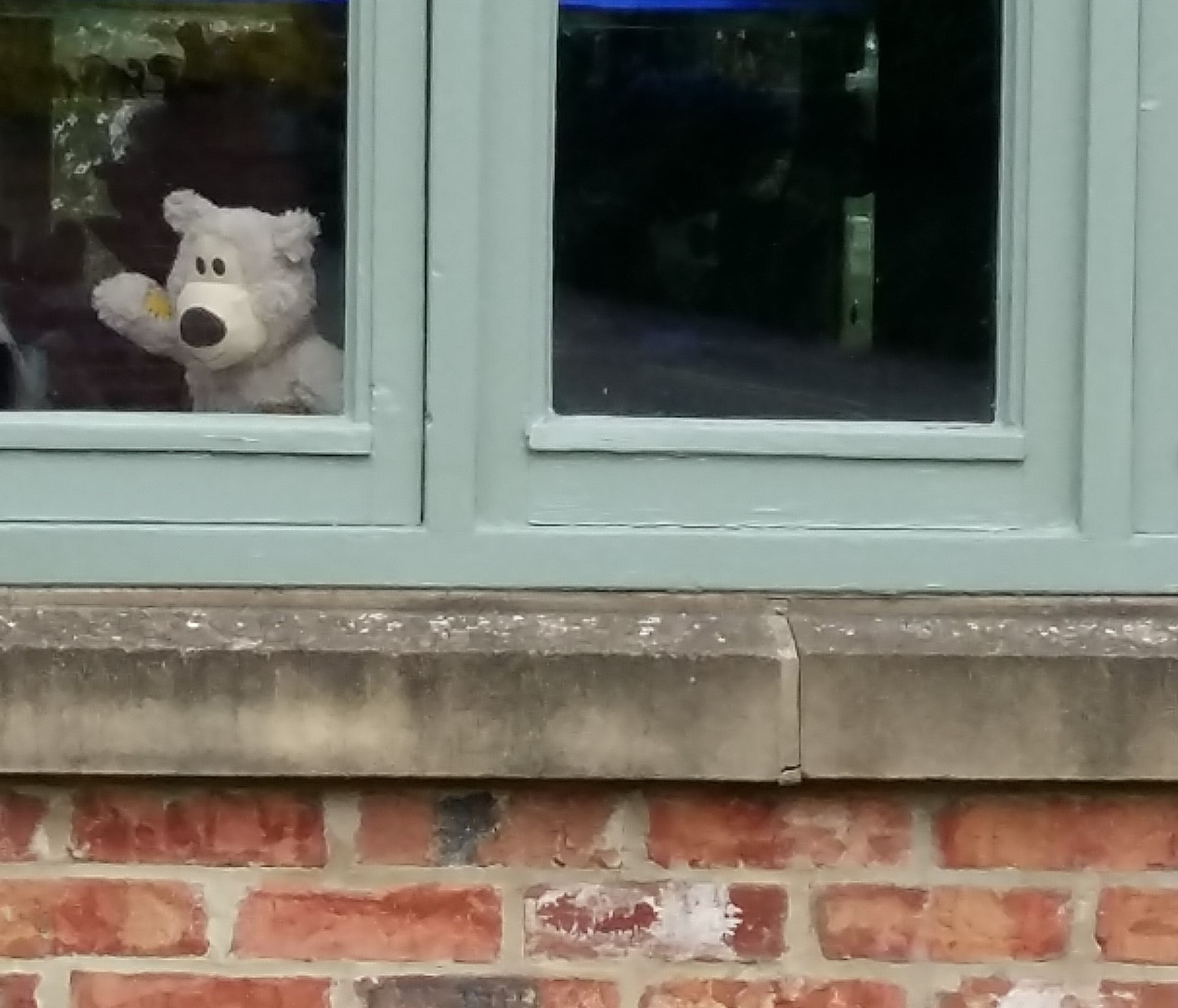 Bear in window cropped